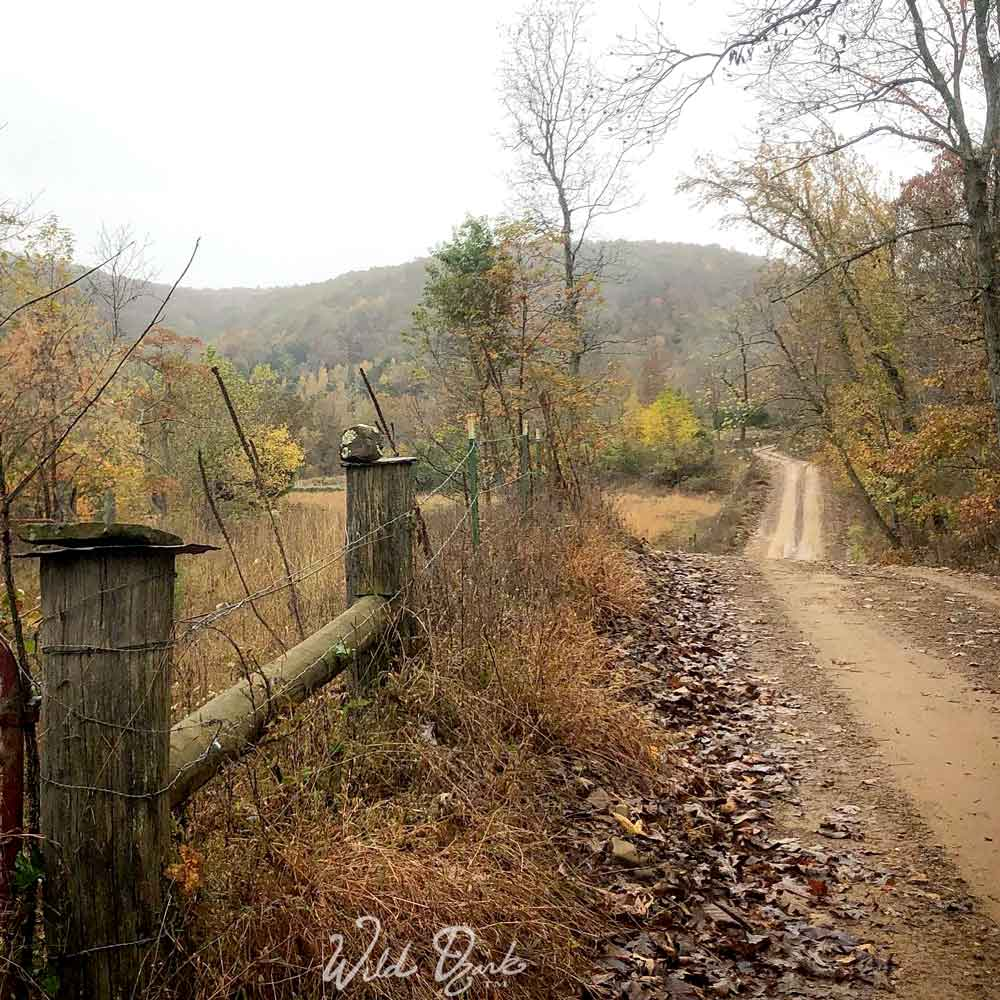 Fenceline running along the Weaver property in Madison county, Arkansas.