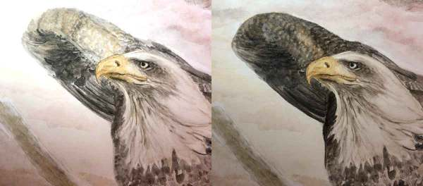 Working on the details of my bald eagle's wing.