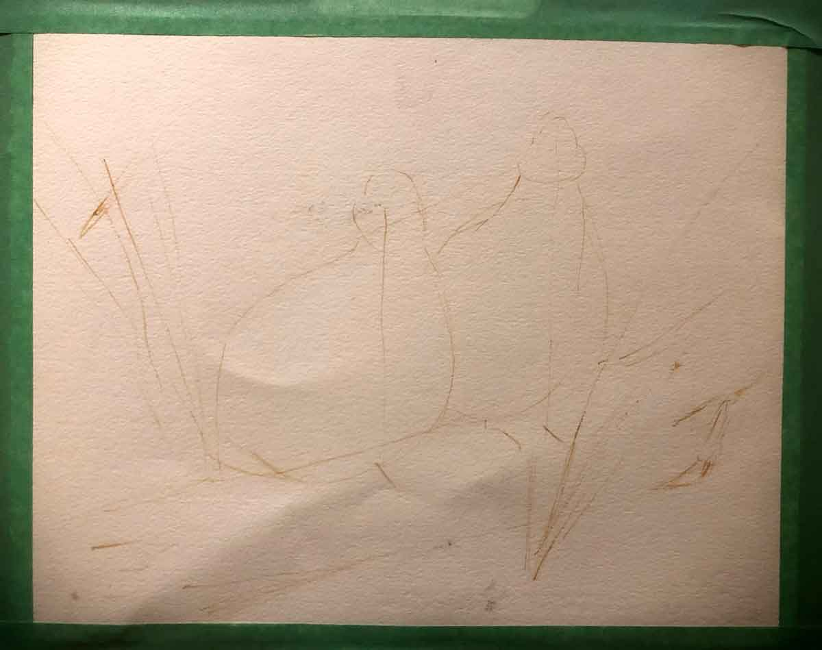 Rough outline sketch for my bobwhite quail painting. I use one of the predominant paint colors and a brush for this, not a pencil.