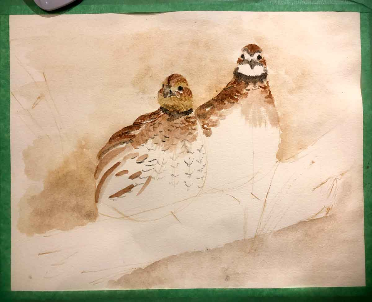 Still adding color to the pair of quail.