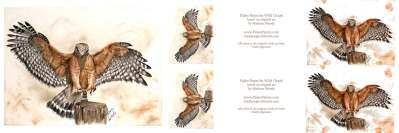 Uncut prints - On the Cusp, red-shouldered hawk by Madison Woods