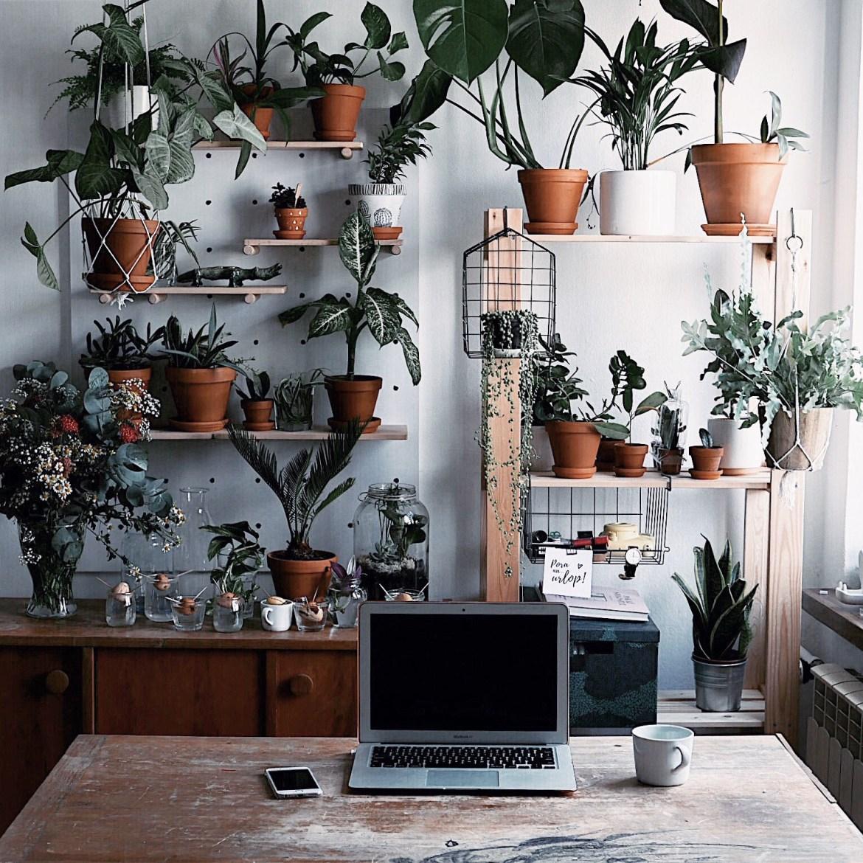 botaniczne miejsce do pracy w domu wild rocks