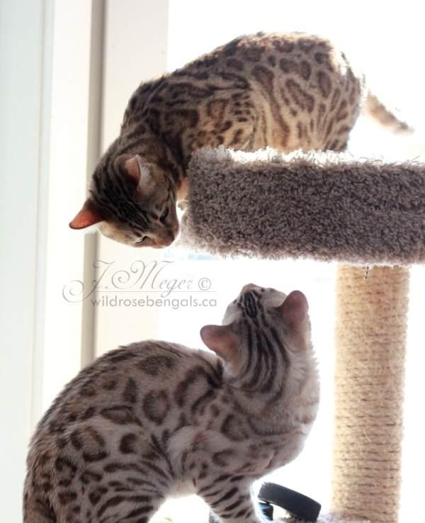 free cat sudbury ontario # 19