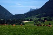Dachstein alpine meadow