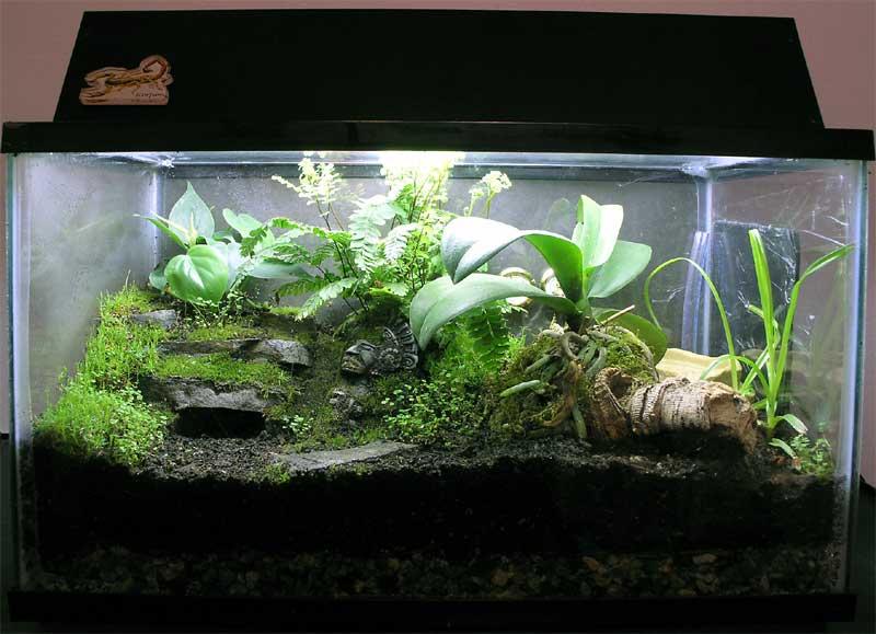 Vivarium Plants Canada