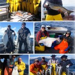 6-14-2016 Salmon and halibut rocked today