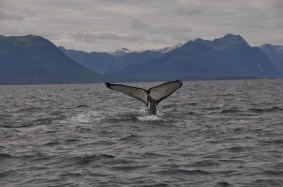 Another Great Shot Of A Whale Tail