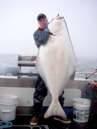 Big Halibut Catch