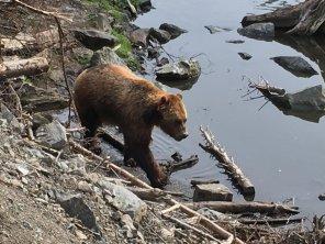 Fortress Of The Bear Sitka Alaska 04