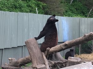 Fortress Of The Bear Sitka Alaska 16