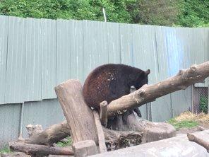 Fortress Of The Bear Sitka Alaska 21