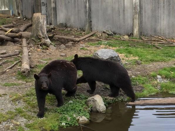 Fortress Of The Bear Sitka Alaska 25