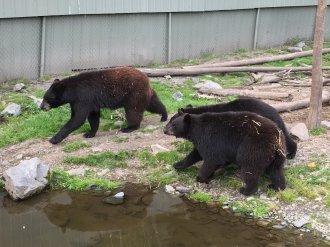 Fortress Of The Bear Sitka Alaska 26