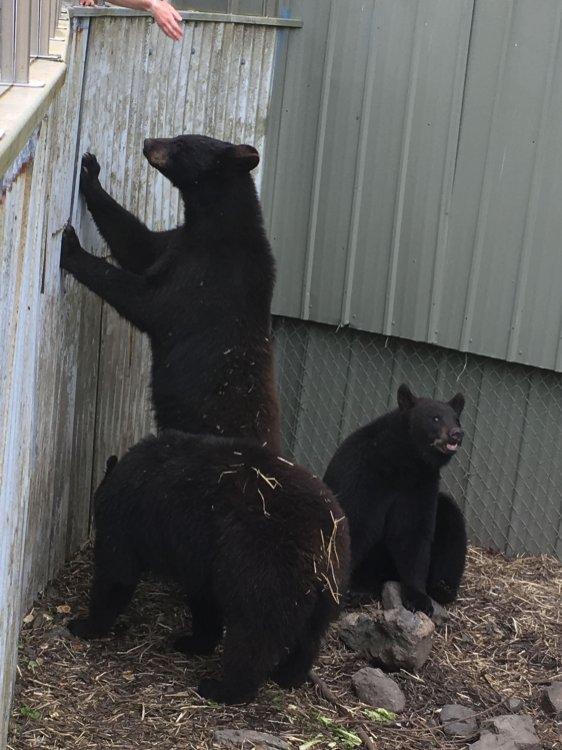 Fortress Of The Bear Sitka Alaska 28