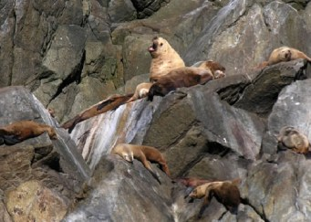 Sea Lions Lounging on the rocks