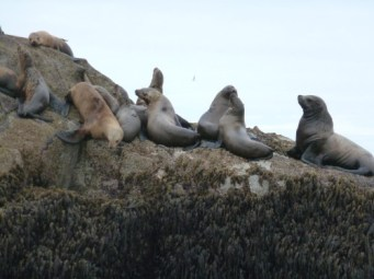 Sea Lion Hangout in the Alaskan Sunshine