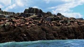 Sealion Island