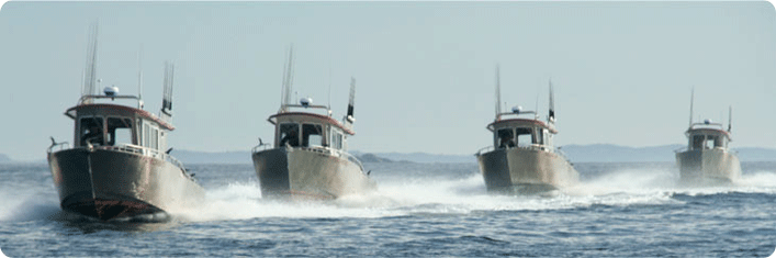 New boats on the go in the Sitka sound in Alaska