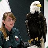 bald eagle, alaska raptor center, eagles, sitka alaska, staff member, learning about eagles