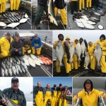 09-06-2017 Bountiful catches plus a large blue shark released unharmed!