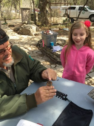 Ranger Craig shows field marks of the Chipping sparrow to my daughter & other attendees of the Bird in Hand workshop