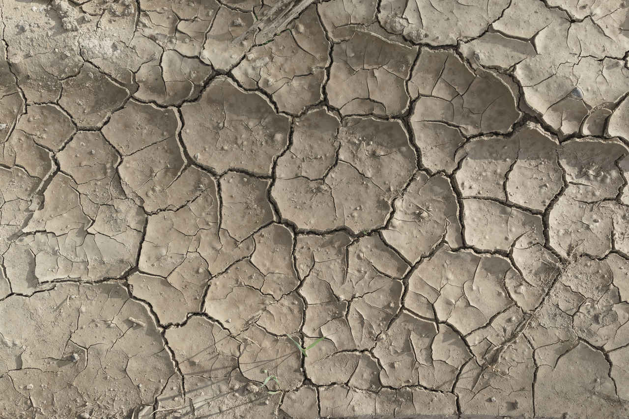 Dried Cracked Mud Texture I