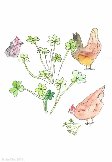 Chickens and weeds 2.6.16