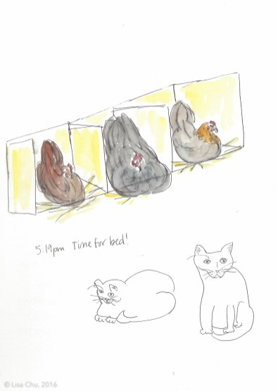 Chickens time for bed 12.2.15