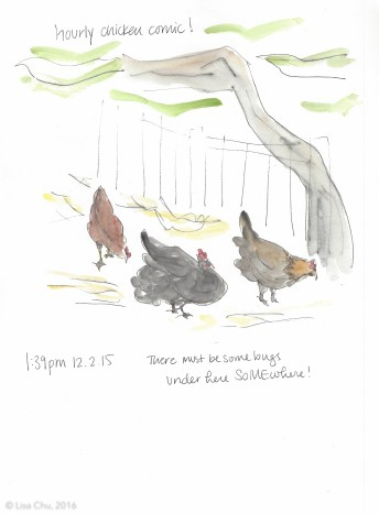 Hourly chicken comic 1.39pm 12.2.15