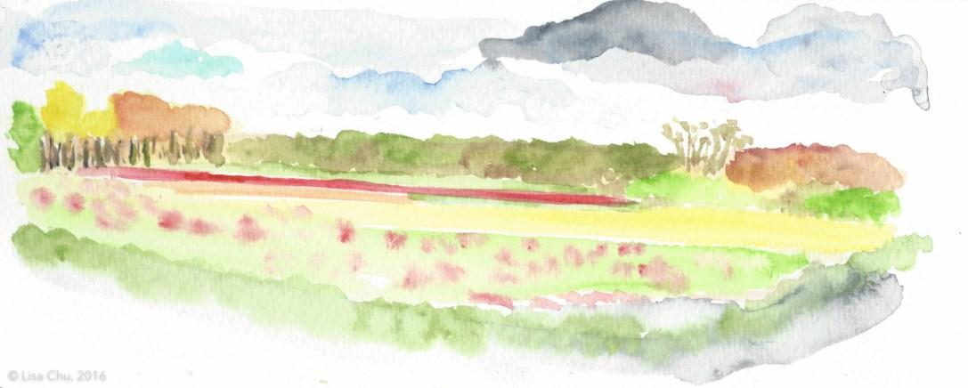 Sketch of a tulip field on my bike ride near Keukenhof