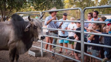 Des will gather you around the rails and introduce you to his buffalo and bulls