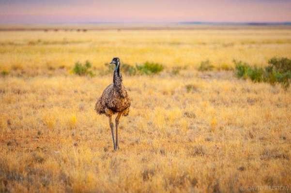 Experience Australia's unique wildlife