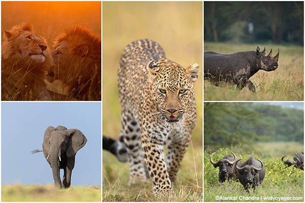 The big 5 of africa