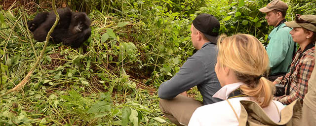 Observing the Gorillas