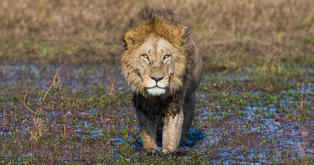 Wildlife of Okavango