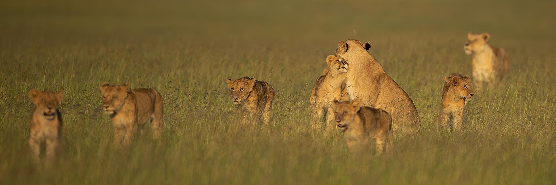 The African big 5