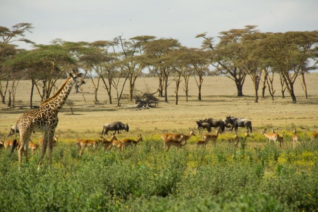 The camp and its stunning wildlife view