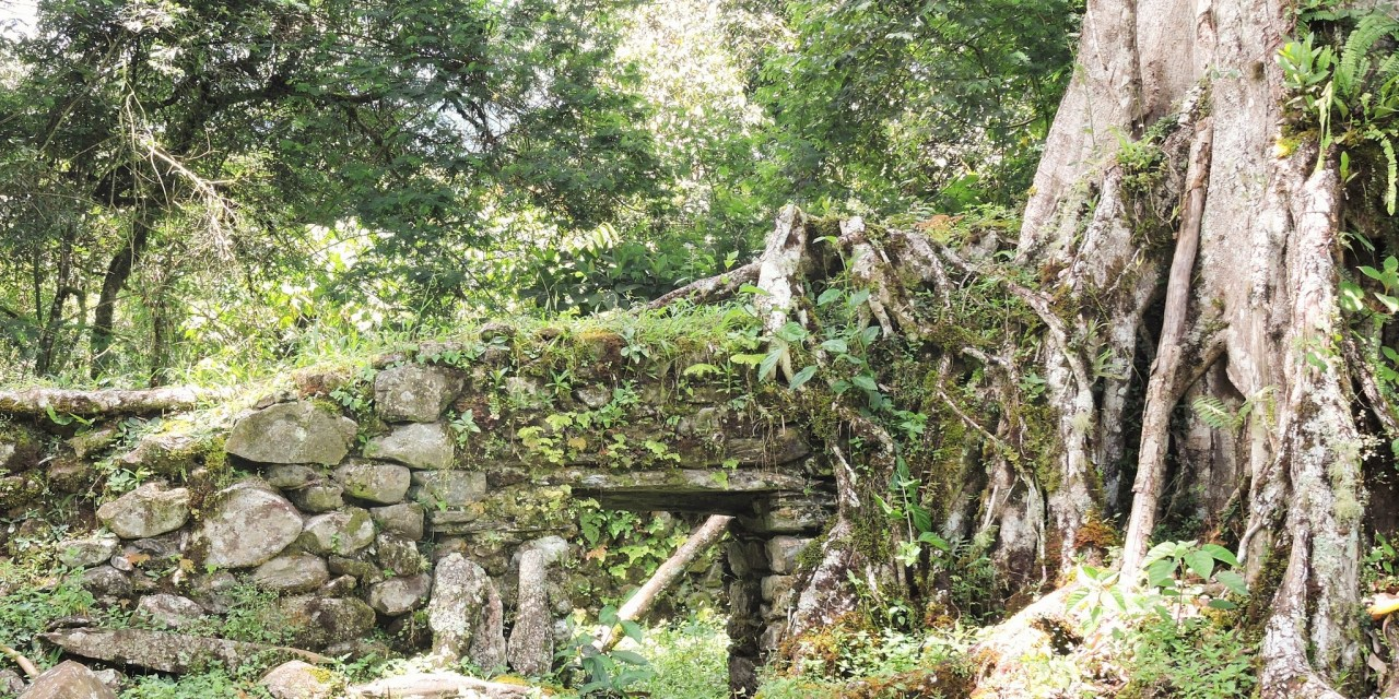 https://i0.wp.com/www.wildwatchperu.com/wp-content/uploads/2019/04/fig-trees-overgrowths-on-Inca-Ruins.jpg?resize=1280%2C640&ssl=1