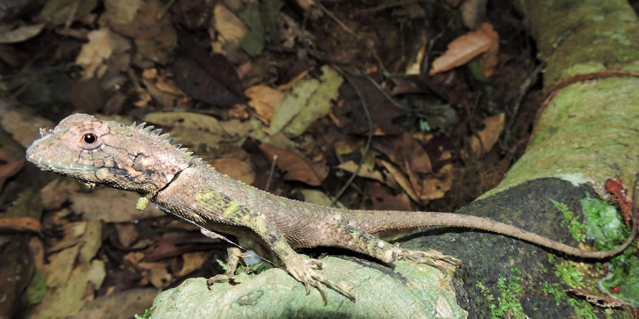 https://i0.wp.com/www.wildwatchperu.com/wp-content/uploads/2019/04/gecko-at-Guadalupe-Lodge.jpg?resize=1280%2C640&ssl=1