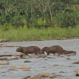 2 Days Amazon Tour Peru