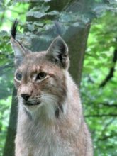 """Bad Wildunger Freizeitanlage verwöhnt als """"Familienbad der Region"""" Sommer, Sonne und Badespaß im Heloponte–Freibad"""