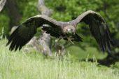 Sonderführungen bei Vollmond  im Tierpark Sababurg