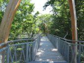 TreeTopWalk - der Baumkronenweg am Edersee