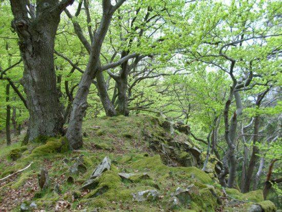 Felswald am Weißen Stein (c) Achim Frede
