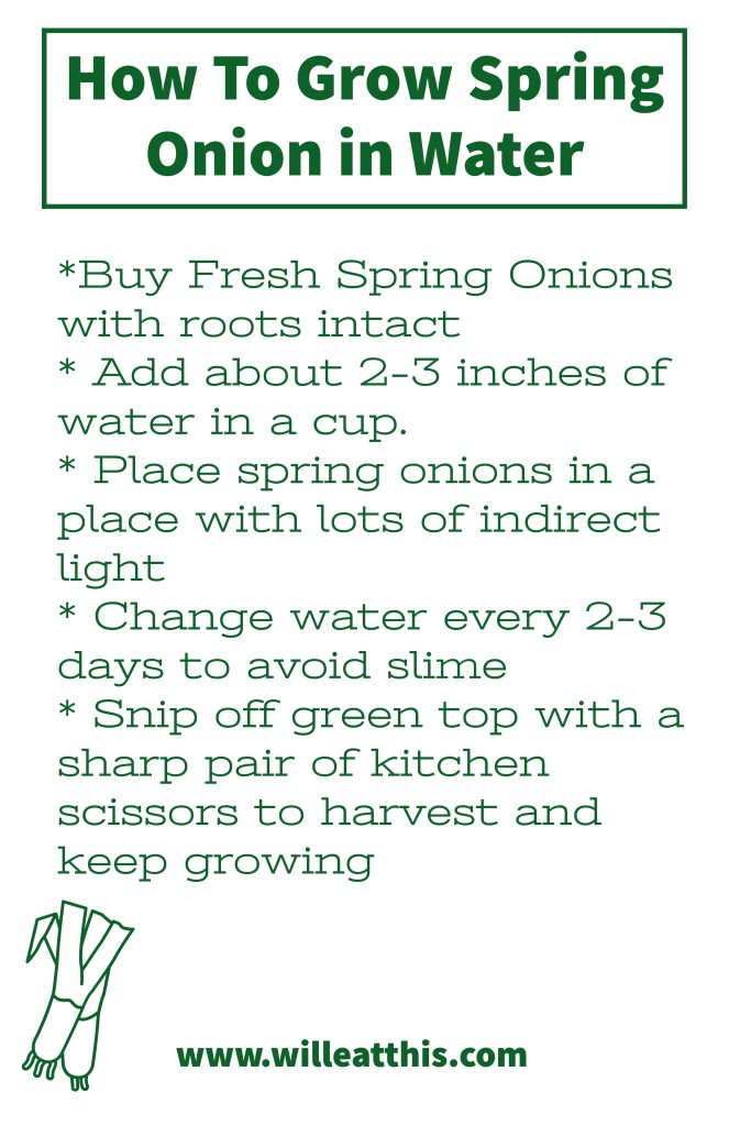 how to grow spring onion in water