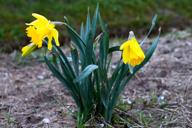 Lente - Willem Croese