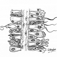Illustration of plant cells