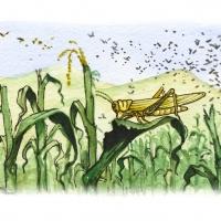 Illustration of locusts in a corn field