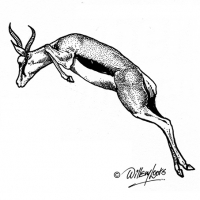 Illustration of a springbok