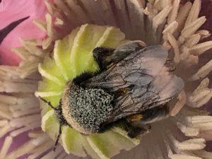 Nectar diefstal